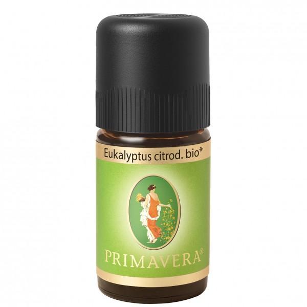 Primavera Eukalyptus citriodora