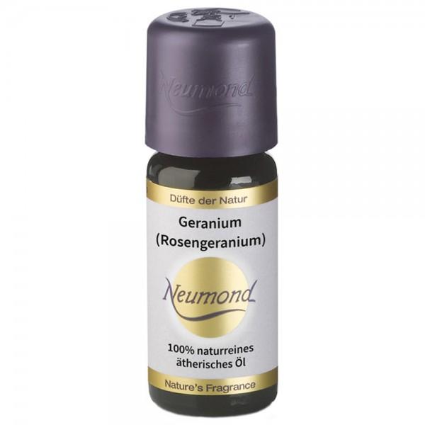 Neumond Geranium Rosengeranie